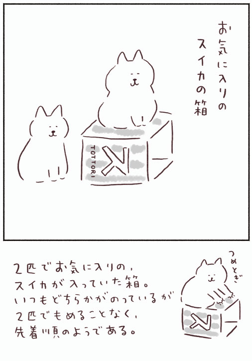 スイカの箱
