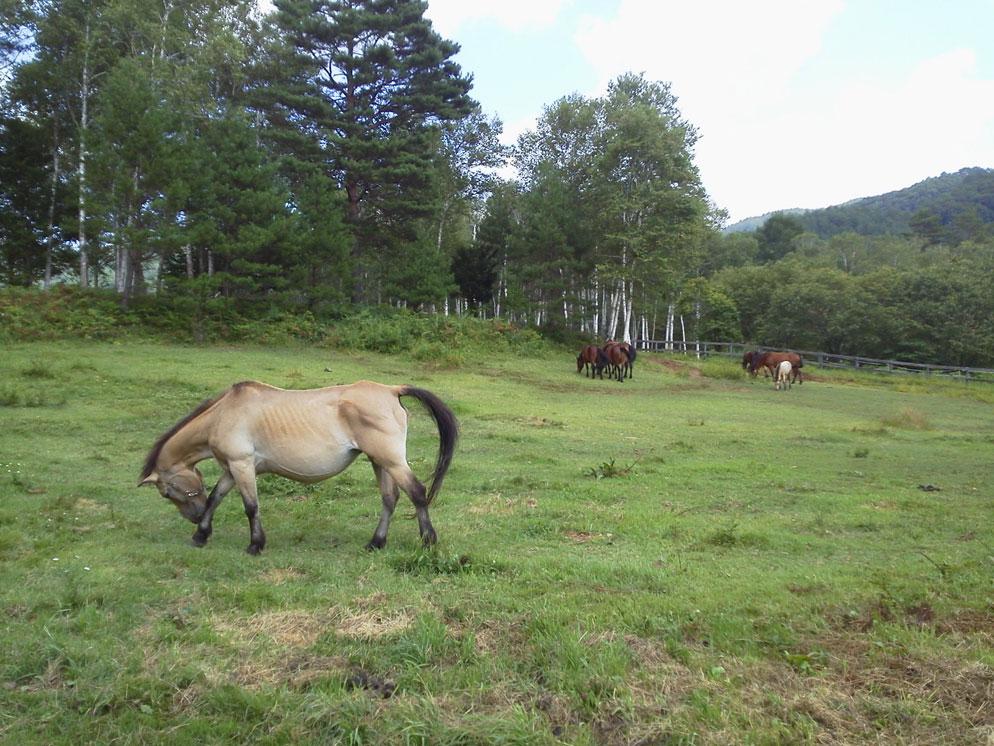 開田高原・木曽馬の里にいってきました