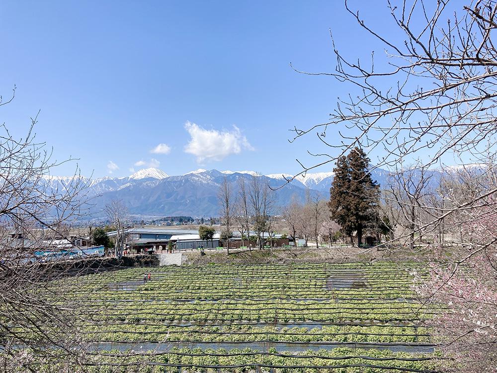 大王わさび農場と松本アルプス公園にいってきました