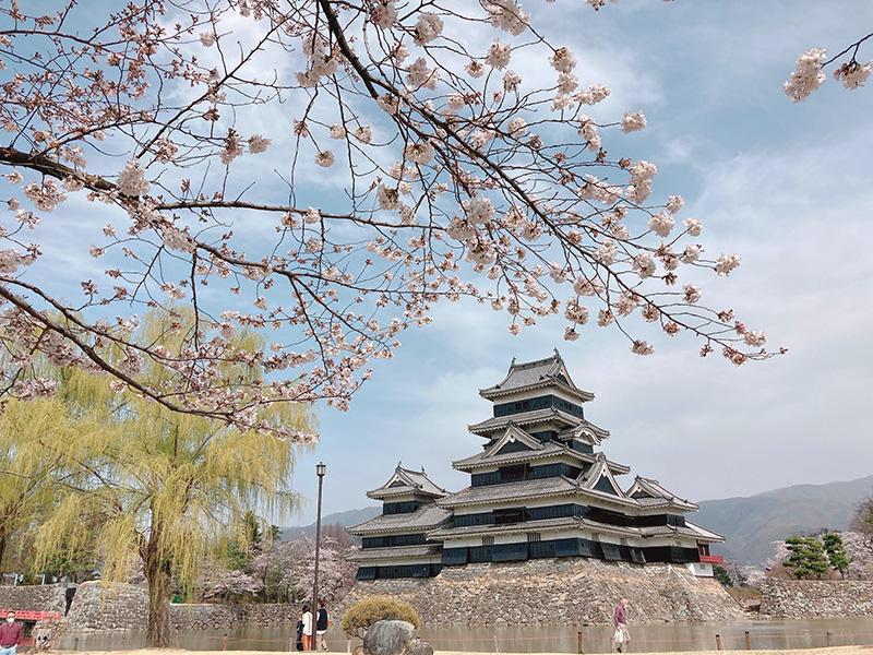 松本城お花見さんぽに行ってきました